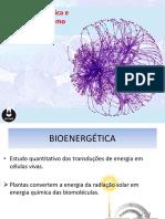 Bioenergética e Metabolismo (1)