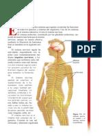 Apunte de sistema nervioso.pdf
