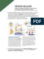 ADH (1).pdf