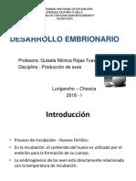 Desarrollo embrionario 11