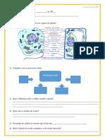 Aabril Ciencias Revisão Giovanna Celulas e Tecidos