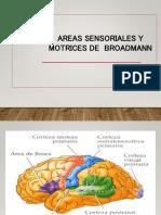Areas Neurosensoriales y Motoras