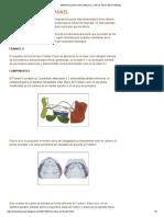 Aparatologia Ortopedica_ Otros Tipos de Frankel