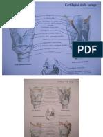 TavoleAnatomiche.pdf