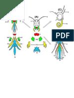 Tipos de piezas bucales que presentan los insectos