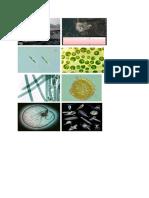 Bab 2 Gambar Plankton