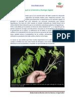 El Niquel en La Nutricion y Fisiologia Vegetal