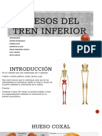 Anatomia Del Tren Inferior