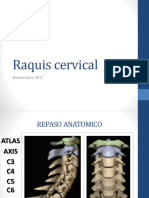 Raquis Cervical