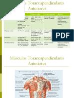 msculosdosmembrossuperiores