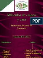 6. Músculos de La Cabeza