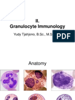2. Granulocyte Immunology