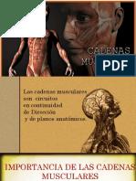 Expo cadenas musculares