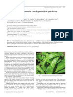 Detection of Pantoea ananatis, causal agent of leaf spot disease of maize, in Mexico