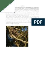 Parasitismo.pdf