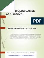 BASES-BIOLOGICAS-DE-LA-ATENCIÓN.pptx
