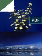 Presentación de PowerPoint_1
