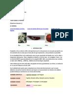 PRODUCCIONde paprica.docx