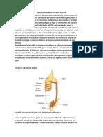 203973610-Caracteristicas-de-La-Cascarilla-de-Arroz.pdf