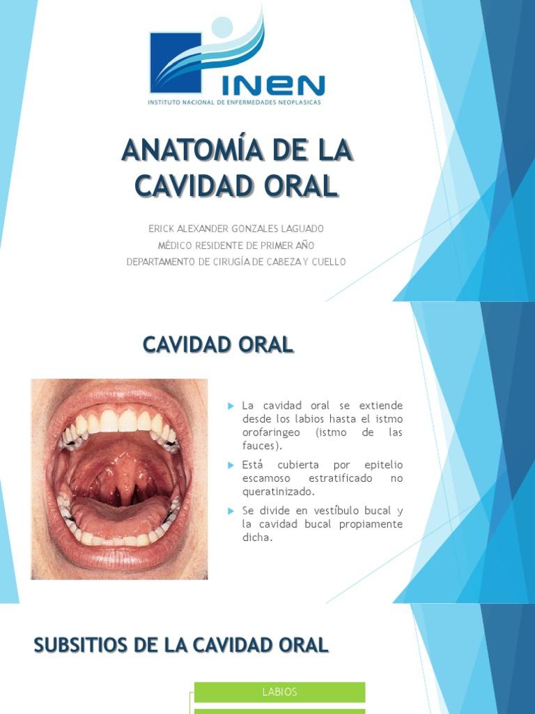 Anatomía Cavidad Oral