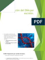 Reparación Del DNA Por Escisión