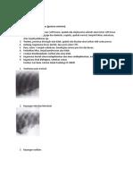 Radiologi_Respi[1]_1.doc