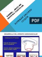 Embriologia Sistema Vascular 2018