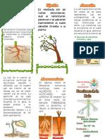 FUNCIONES DE LA RAIZ.docx
