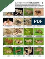 576 Anfibios y Reptiles Meta