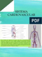 Anatomia Del Corazòn.docx