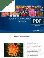 Tutorial+de+Produccion+de+Gerbera-0517-SAKATA.pdf