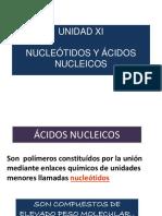 UNIDAD XI. Nucleótidos y ADN.ppt