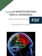 Cerebro Morfo Funcional