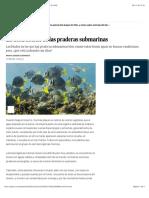 2016 02 13 - El Pais - La destrucción de las praderas submarinas