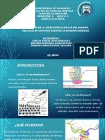 EXPO DE GENETICA.pptx