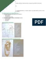 1.-Parodontiul