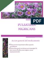 PULSATILLA NIGRICANS[1]