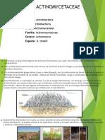 Familia Actinomycetaceae