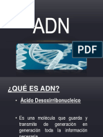 ADN (1)