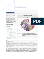 Lobulos cerebrales 1.docx