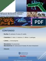 TEORIA 6. Bacillus Listeria Clostridium Mycobacterium Neisseria
