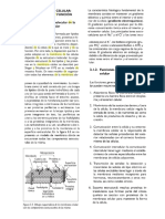 membrana.docx