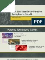 PCR Para Identificar Parasito Toxoplasma Gondii