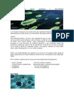 DEFINICION DE VIRUS HONGOS Y BACTERIAS.doc