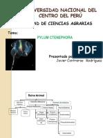 PYLUM CTENEPHORA 2°