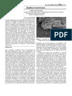 SEM37_14 biofilms.pdf