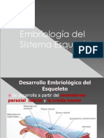 embriologiadeldesarrollodelesqueleto-110917111905-phpapp01