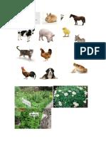 animales y plantas marvin david.docx