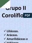 LILIACEAS SEMANA 14.ppt