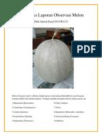 Hasil Teks Laporan Observasi Melon